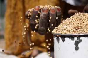 somali-development-organisation-food-support